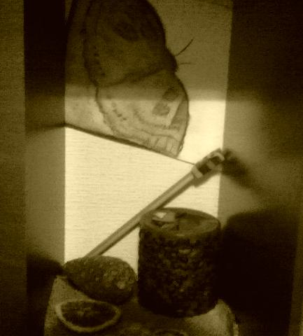 drugelis nori kavos žvakės.